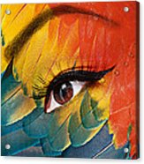 Macaw Acrylic Print by Yosi Cupano