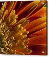 Macro Blumen Acrylic Print