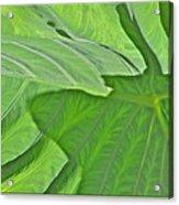 Macro Leaf Structure Acrylic Print