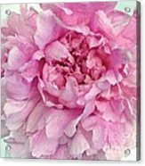 Macro Peony Abstract Acrylic Print