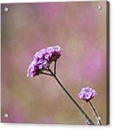 Macro Purple Flower Square Acrylic Print
