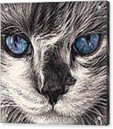 Mad Cat Acrylic Print by Elena Kolotusha