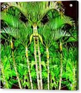 Madagascar Acrylic Print