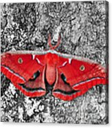 Madam Moth - Red White And Black Acrylic Print