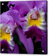 Maddie's Orchid Acrylic Print