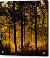 Magic Shadow Of Tree Acrylic Print