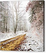 Magic Trail Acrylic Print by Debra and Dave Vanderlaan