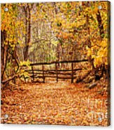 Magical Autumn Acrylic Print by Cheryl Davis