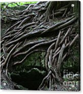 Magical Tree Roots Acrylic Print by Chris Hill