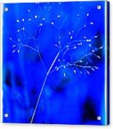 Magical Weed Acrylic Print