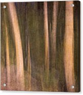 Magical Wood Acrylic Print