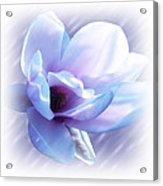 Magnolia Blues Acrylic Print