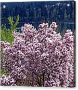 Magnolia By The Lake Acrylic Print
