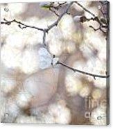 Magnolia Dream Acrylic Print