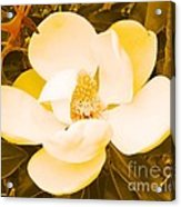 Magnolia In Color Acrylic Print by Lorraine Louwerse