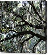 Magnolia Meets Live Oak Acrylic Print