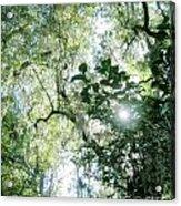 Magnolia Plantation Sc Acrylic Print
