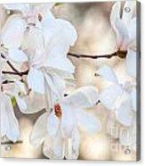 Magnolia Spring Acrylic Print
