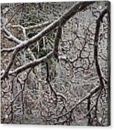 Magnolia Tree Branches Covered With Ice No.3834 Acrylic Print
