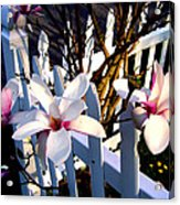 Magnolis's On A Picket Fence Acrylic Print