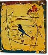 Magpie Framed In Maple Acrylic Print by Carolyn Doe