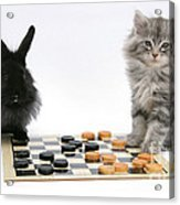 Maine Coon Kitten And Black Rabbit Acrylic Print