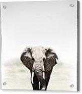 Majestic Elephant 2 Acrylic Print