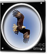 Majestic Flight Acrylic Print