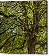 Majestic Tree Acrylic Print