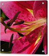 Major Big Bloom Acrylic Print