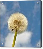 Make Another Wish Acrylic Print