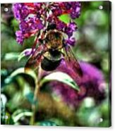 Making Things New Via The Bee Series Acrylic Print
