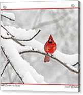 Male Cardinal In Snow Acrylic Print