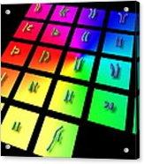 Male Chromosome Set Acrylic Print