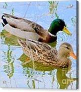 Mallard Couple Acrylic Print