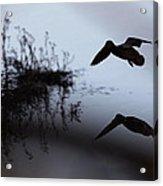 Mallard - Duck - Near The Tombigbee Acrylic Print
