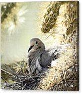 Mama Dove Acrylic Print
