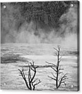 Mammoth Hot Spring Acrylic Print
