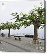 Man With Dog Walking On Empty Promenade With Trees Acrylic Print