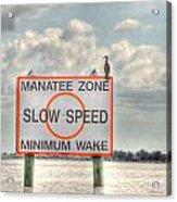 Manatee Zone Acrylic Print
