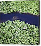 Mangrove River Acrylic Print