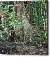 Mangroves Acrylic Print