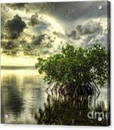 Mangroves I Acrylic Print