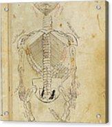 Mansurs Anatomy, Skeletal System, 15th Acrylic Print