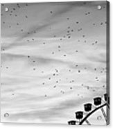Many Birds Flying Over Giant Wheel In Berlin Acrylic Print by Image by Ivo Berg (Crazy-Ivory)