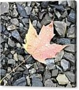 Maple Leaf In The Rain Acrylic Print