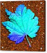 Maple Leaf On Pavement Acrylic Print
