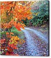 Maple Road Acrylic Print