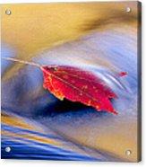 Maple Stream Acrylic Print