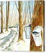 Maple Trail Acrylic Print